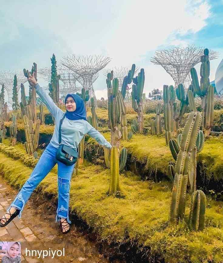 gambar jalur kaktus taman bunga celosia 2 semarang